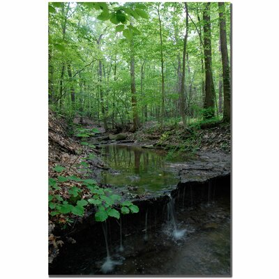 Trademark Fine Art 'Tiny Forest Falls' by Kurt Shaffer Photographic Print on Canvas