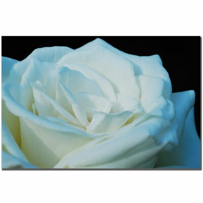 Trademark Fine Art 'White Rose' by Kurt Shaffer Photographic Print on Canvas