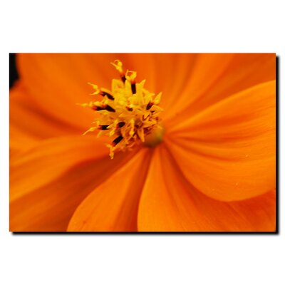 "Trademark Fine Art Orange Flower by Kurt Shaffer, Canvas Art - 18"" x 24"""