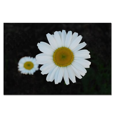 Trademark Art Daisies on Black by Kurt Shaffer, Canvas Art - 22