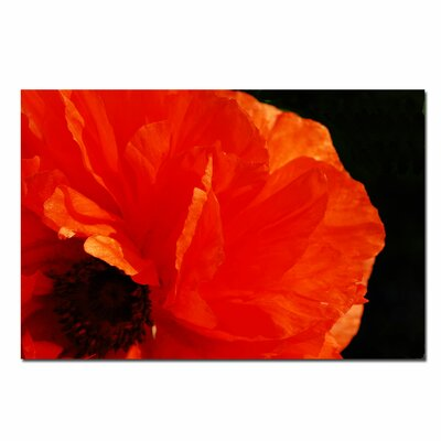 "Trademark Fine Art Poppy on Black by Kurt Shaffer, Canvas Art - 16"" x 24"""