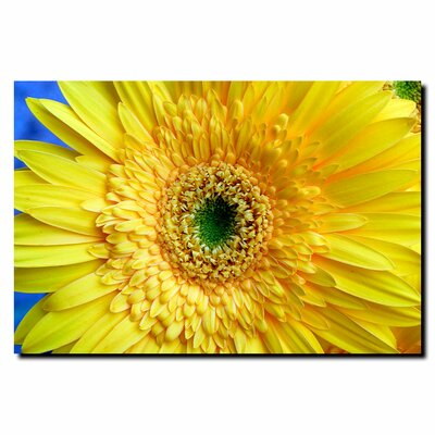 Trademark Fine Art 'Yellow Gerber' by Kurt Shaffer Photographic Print on Canvas