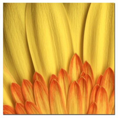 """Trademark Fine Art """"Flame"""" by Aiana Photographic Print on Canvas"""