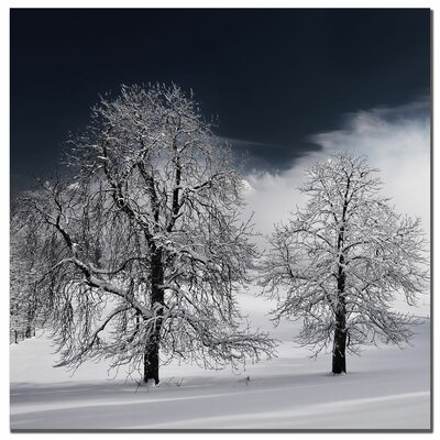 "Trademark Fine Art ""White Nature"" by Philippe Sainte - Laudy Photographic Print on Canvas"