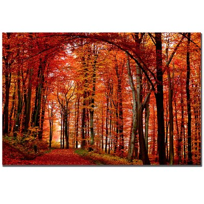 "Trademark Fine Art ""The Red Way"" by Philippe Sainte-Laudy Photographic Print on Canvas"