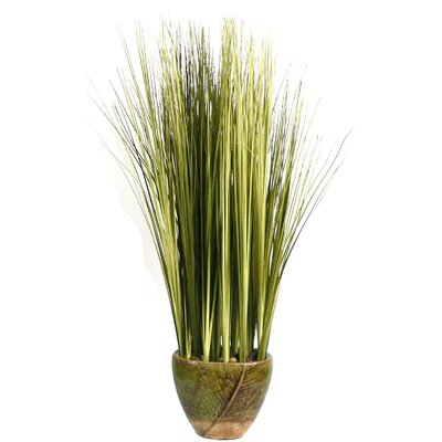 Onion Grass in Ceramic Container
