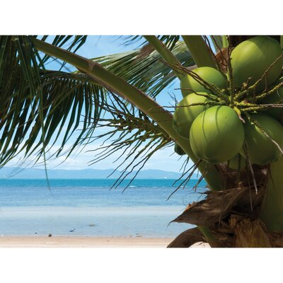 Island Way Outdoor Coconuts Canvas Wall Art