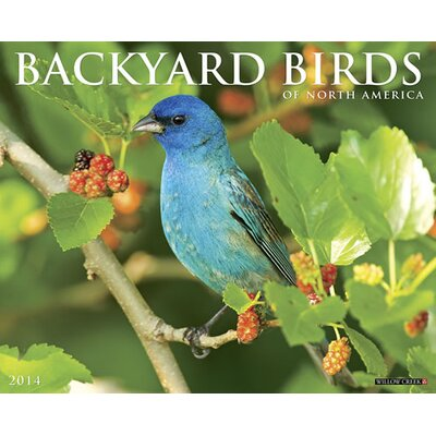 Willow Creek Press Backyard Birds 2014 Wall Calendar