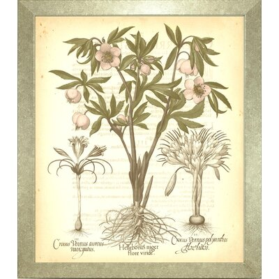 Floral Living Besler Botanica1 Framed Graphic Art