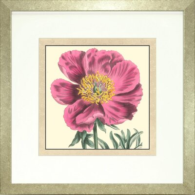 Floral Living Peony 3 Framed Graphic Art