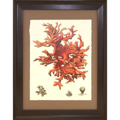 Seaside Living Coral III Framed Wall Art
