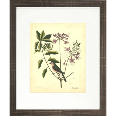 Floral Living Catesby Bird and Botanical I Framed Wall Art