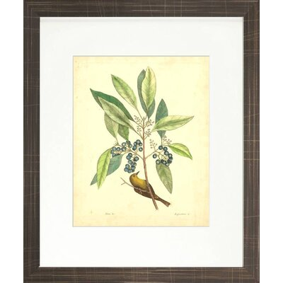 Floral Living Catesby Bird and Botanical V Framed Wall Art