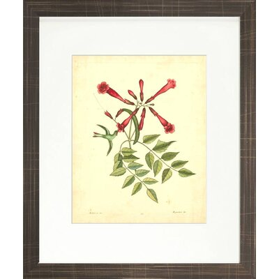 Floral Living Catesby Bird and Botanical VI Framed Graphic Art