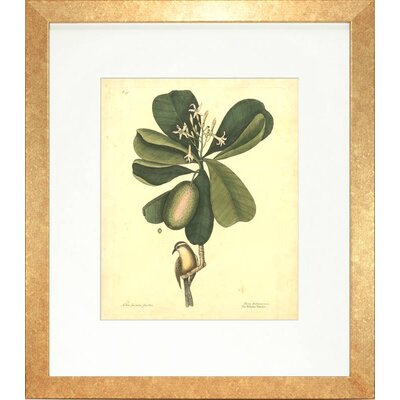 Floral Living Catesby Bird and Botanical III Framed Graphic Art