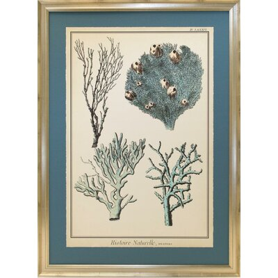 Seaside Living Coral Species II Framed Wall Art