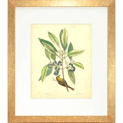 Floral Living Catesby Bird and Botanical V Framed Graphic Art