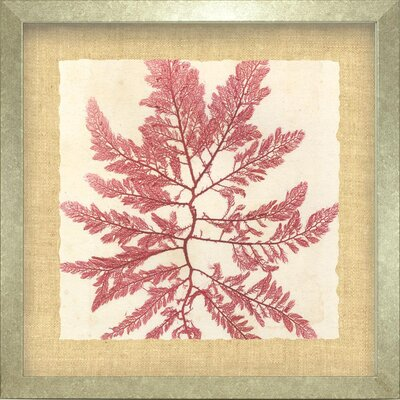 Indigo Avenue Seaside Living Brilliant I Framed Graphic Art in Seaweed Red