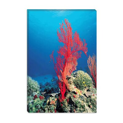 iCanvasArt Red Coral Photographic