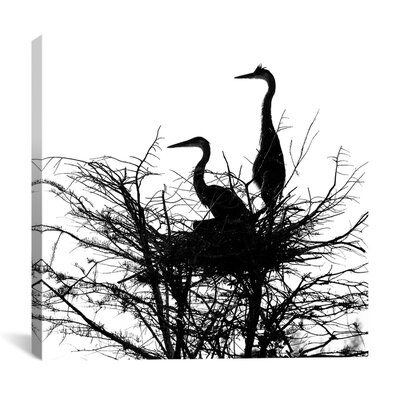 "iCanvasArt ""Birds Nesting"" Canvas Wall Art by Harold Silverman"