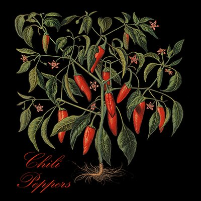 """iCanvasArt """"Chili Peppers"""" Canvas Wall Art by Mindy Sommers"""
