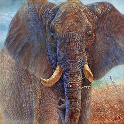 """iCanvasArt """"Giant Elephant"""" Canvas Wall Art by Cory Carlson"""