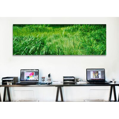 iCanvasArt Panoramic Grass on a Marshland, England Photographic Print on Canvas