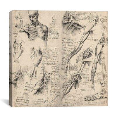 "iCanvasArt ""Sketchbook Studies of Human Body Collage"" Canvas Wall Art by Leonardo da Vinci"