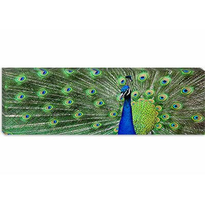 iCanvasArt Aqua Peacock from Color Bakery collection (Panoramic) Canvas Wall Art