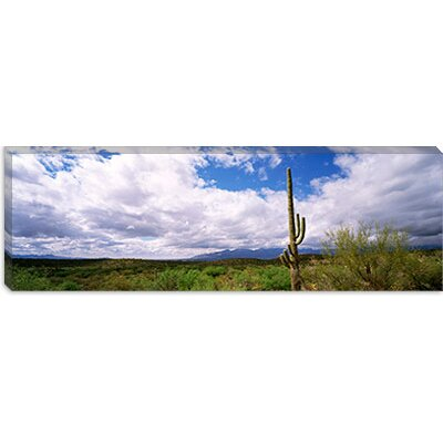 iCanvasArt Cactus in a Desert, Saguaro National Monument, Tucson, Arizona Canvas Wall Art