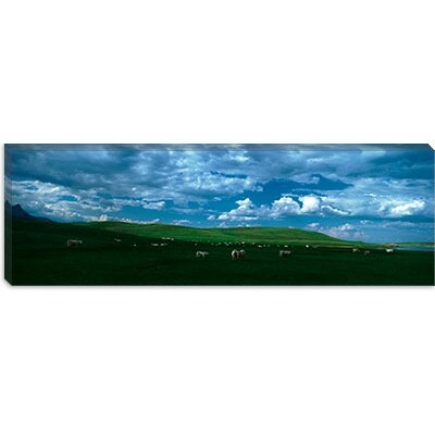 iCanvasArt Charolais Cattle Grazing in a Field, Rocky Mountains, Montana Canvas Wall Art