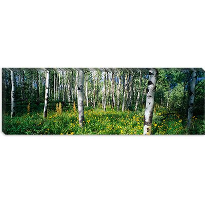 iCanvasArt Field of Rocky Mountain Aspens Canvas Wall Art