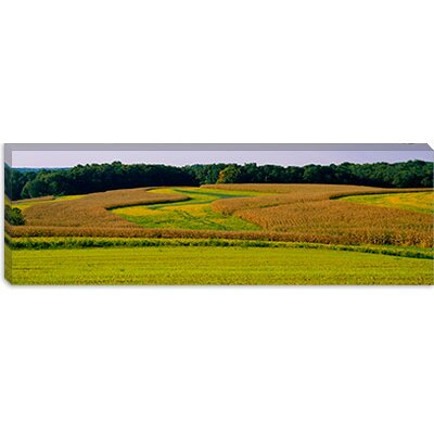 iCanvasArt Field of Corn Crops, Baltimore, Maryland Canvas Wall Art