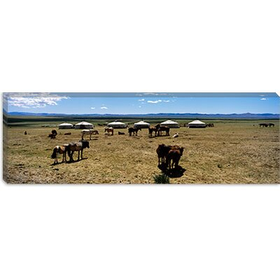 iCanvasArt Group of Horses and Yurts in a Field, Independent Mongolia Canvas Wall Art