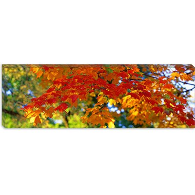 iCanvasArt Fall Foliage, Guilford, Baltimore City, Maryland Canvas Wall Art