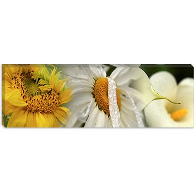 iCanvasArt Yellow and White Flowers Canvas Wall Art