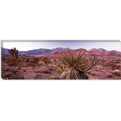 iCanvasArt Yucca Plant in a Desert, Red Rock Canyon, Las Vegas, Nevada Canvas Wall Art ...