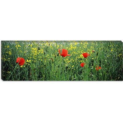 iCanvasArt Baden-Wurttemberg, Germany Canvas Wall Art