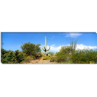 iCanvasArt Tucson, Arizona Canvas Wall Art