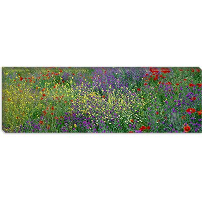 iCanvasArt Wildflowers El Escorial Spain Canvas Wall Art