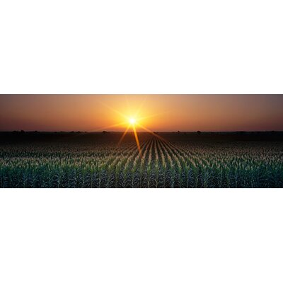 iCanvasArt Sunrise, Crops, Farm, Sacramento, California Canvas Wall Art