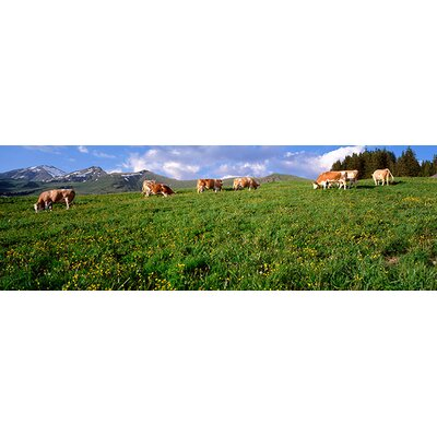 iCanvasArt Switzerland, Cows Grazing in the Field Canvas Wall Art