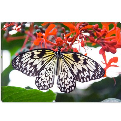 iCanvasArt White Butterfly Canvas Wall Art