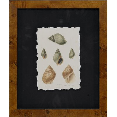 Epic Art Cawley's Shells Framed Photographic Prints