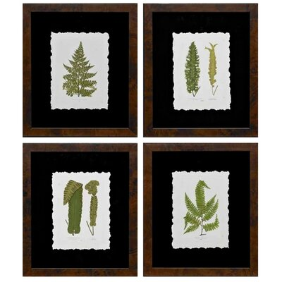 Toland's Ferns Framed Graphic Art