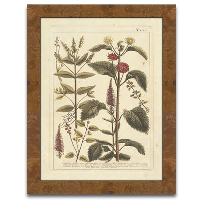 Epic Art The Botanist's Measure Autumn Weinmann V Wall Art