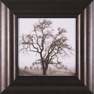 Country Oak Tree Petite, Coast Oak Tree Petite, Willow Tree Petite and Hillside Oak Tree ...
