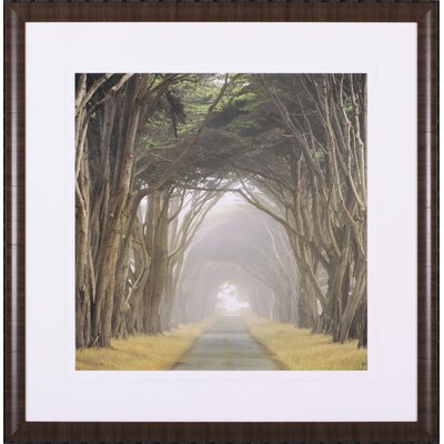 Corridor of Cypress by E. Loren Soderberg Framed Photographic Print