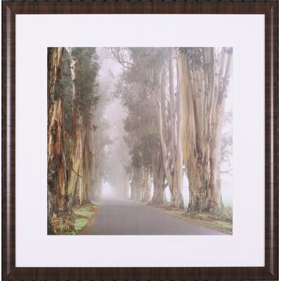 Eucalyptus in The Fog and Corridor of Cypress by E. Loren Soderberg Framed Photographic Print ...