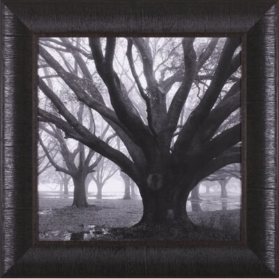 Art Effects Oak Grove, Winter Framed Artwork
